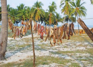 Fish being dried on clothes line by locals