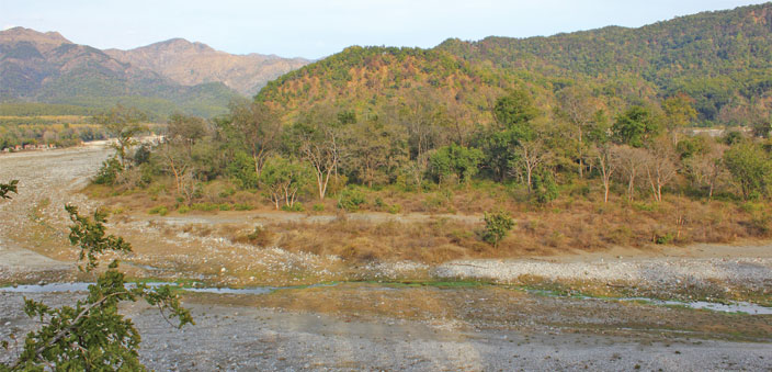 India's forests hold rich biodiversity