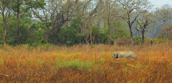The Kaziranga National Park, Assam