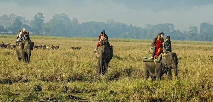 Wild and beautiful Kaziranga
